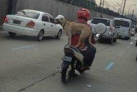dog-with-crazy-balance-riding-motorcycle.jpg