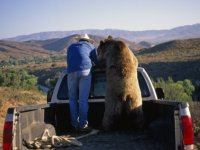 joel-sartore-trainer-and-his-grizzly-bear-in-the-back-of-a-pick-up-truck.jpg
