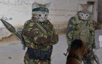 Attack Cats.jpg