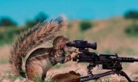Funny squirrels with guns2.jpg