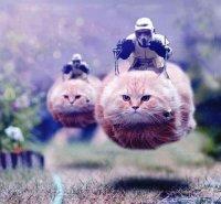 storm-trooper-cats.jpg