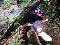 enduro-tours-cambodia-tree.jpg