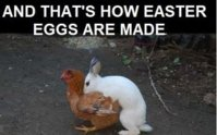 This is how Easter Eggs are made.jpg
